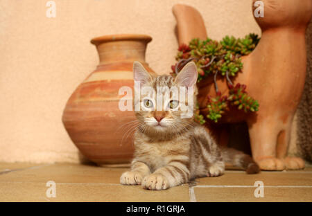 young cat, 10 weeks old, red tabby, lying on a stairway - Stock Photo