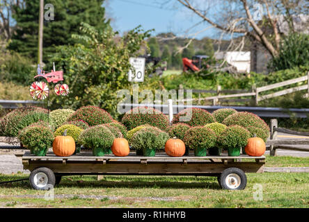 wagon with pumpkins and mums in East Hampton, NY - Stock Photo