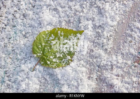 green raspberry leaf in snow freshness cold frosty background close-up - Stock Photo