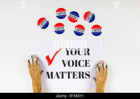 American election activism concept with dog paws. Top view of political sign and vote day badges on white background - Stock Photo