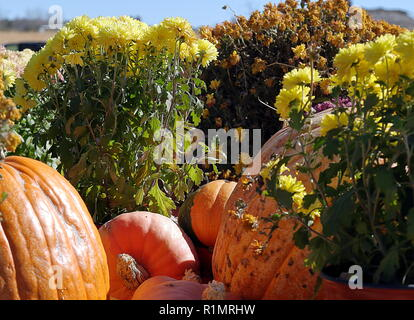 A small still life on the topic of Halloween. A few pumpkins and flowers in sunny day - Stock Photo