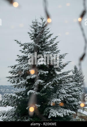 Christmas lights hanging in window with view of snowy trees - Stock Photo