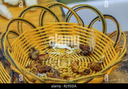 Silkworm larva in a basket, process of making silk thread by hand at a factory in Beijing, China - Stock Photo