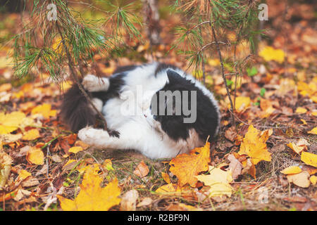 Black and white cat lay on the leaves in the autumn forest. Cat enjoying life - Stock Photo