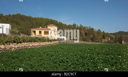Typical tranquil countryside landscape with rustic houses, agricultural fields and animal farms in the highest village in Spain, in Tenerife - Stock Photo