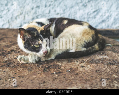 Three colors homeless blind cat. Dirty lonely cat looking something on rust ground. - Stock Photo