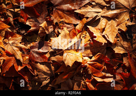 Background of autumnal leaves - Stock Photo
