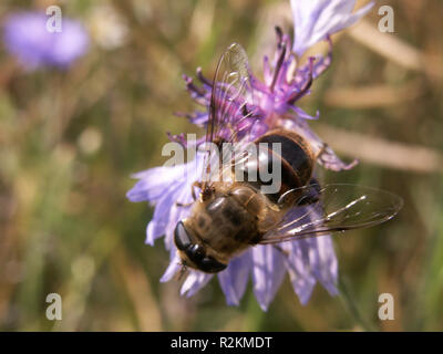 insect on flower - Stock Photo