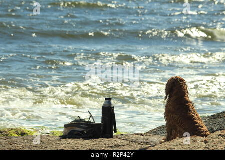 dog looks to the ocean waiting for his owner and take care of his mate herb thermos at Punta del Diablo, Uruguay - Stock Photo