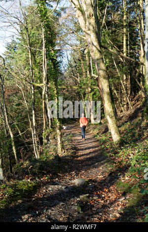 A woman in a brightly coloured coat walking her dog in the forest in early morning sunshine. - Stock Photo