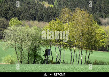 high seat with birches - Stock Photo