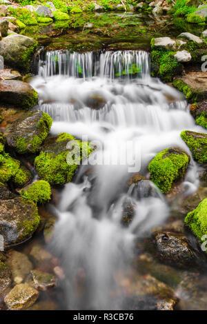 Fern Spring, Yosemite National Park, California, USA - Stock Photo