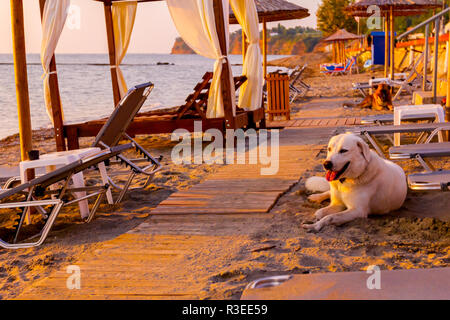 The dog is relaxing at early morning Sun, dawn, on a sandy beach. - Stock Photo