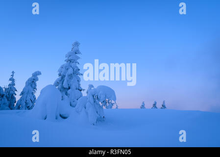 Fabulous winter trees in the snow. Twilight landscape with forest on a hill. View in blue with copy space - Stock Photo