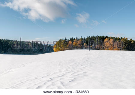 Winterlandschaft in den Bergen mit Laub- und Nadelbäumen mit Herbstfärbung - Stock Photo