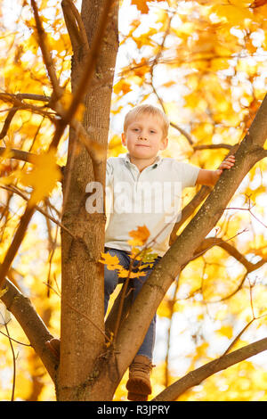Photo of small boy sitting on tree in autumn - Stock Photo