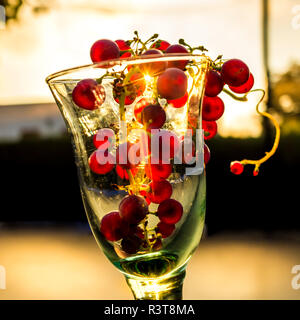 Blue grape in wine glass against evening sun - Stock Photo
