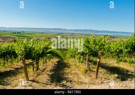 USA, Washington State, Yakima Valley. Red Willow Vineyard. - Stock Photo