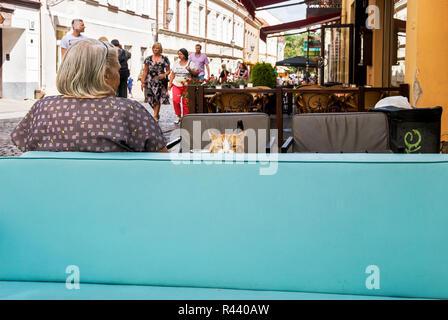 Cat on a sofa in Pilies Gatvè, Vilnius, Lithuania - Stock Photo