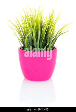 Green grass in a pink pot isolated on white background with shadow reflection. Green grass in flowerpot made of porcelain. Green grass in clay pot on  - Stock Photo
