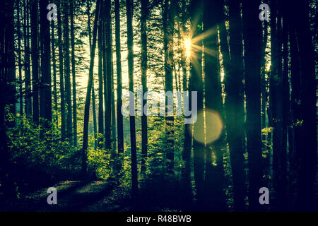 melancholic forest scene in summer - trees backlit with star - Stock Photo