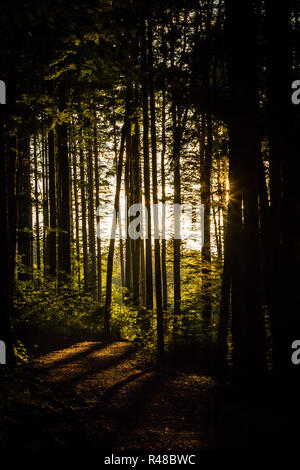 melancholic forest scene in the backlight - Stock Photo