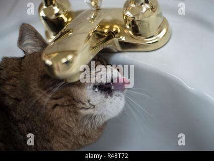 cat drinking from a faucet in the bathroom - Stock Photo