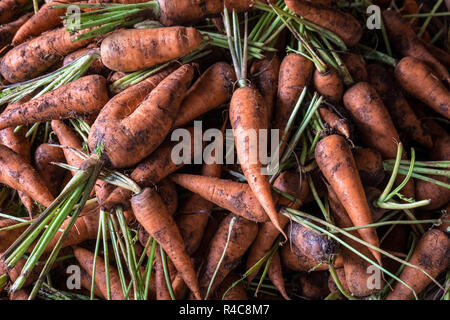 Carrots on display at a stall in Dong Ba Market in Hue, Vietnam - Stock Photo