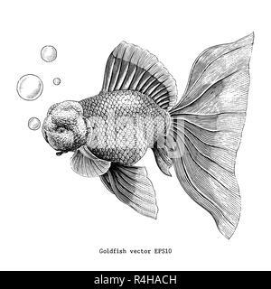 Goldfish hand drawing vintage engraving illustration - Stock Photo