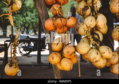 Photo of a bunch of yellow saling coconuts - Stock Photo