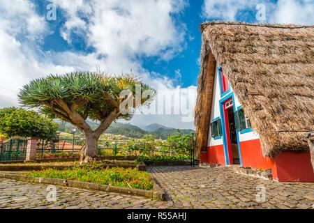 Traditional strawy hut with dragon tree palma on Madeira island, Santana, Portugal - Stock Photo