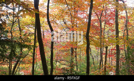 A colorful view of fall foliage in the Appalachian Mountains of North Carolina. - Stock Photo