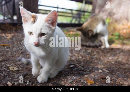 kitten and its mother in nature. love. care - Stock Photo