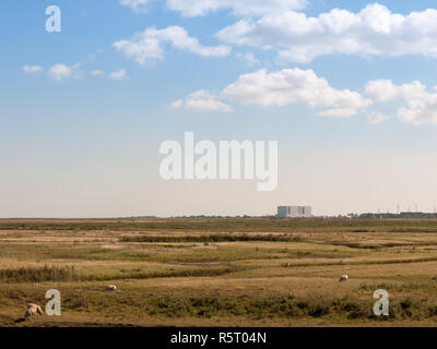 nuclear power plant at bradwell on sea in distance over land with sheep up front landscape - Stock Photo