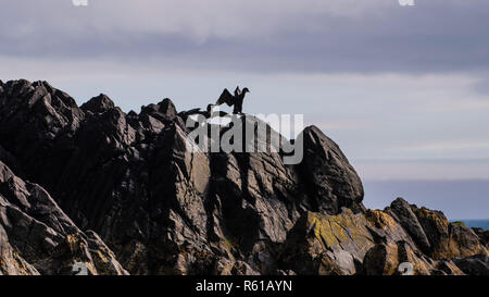Breeding pair of Great Cormorants showing mating behaviour beside nest on the cliff - Stock Photo