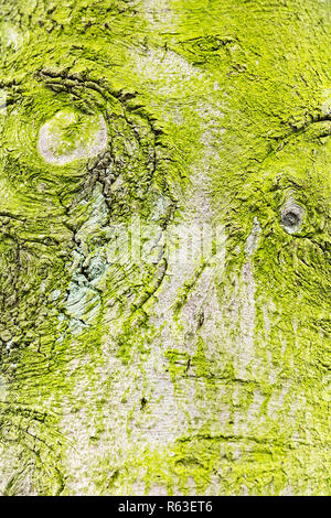 tree face in green. - Stock Photo