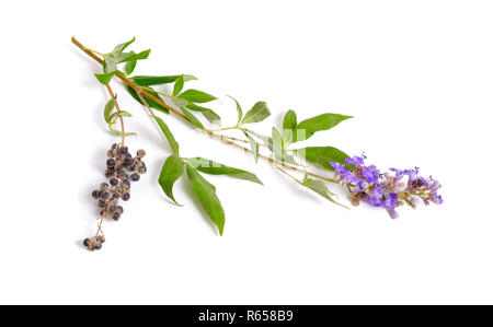 Vitex agnus-castus, also called vitex, chaste tree or chastetree, chasteberry, Abraham's balm, lilac chastetree or monk's pepper isolated - Stock Photo