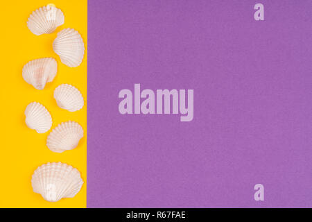white seashells in a white frame on a colored background - Stock Photo