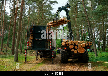 Forestry, forwarder, pine trunks,  (Pinus sylvestris), pine forest, forest technology, forest machinery, Sarenseck, Lower Saxony, Germany - Stock Photo