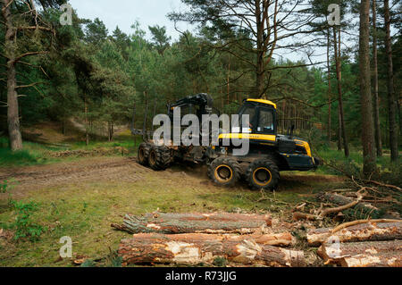 forestry, forwarder, Ponsse, pine, (Pinus sylvestris), pine forest, forest technology, forest machinery, Sarenseck, Lower Saxony, Germany - Stock Photo