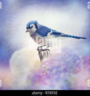 Blue jay in Flower garden - Stock Photo