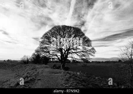 Ancient tree at Neolithic site - Stock Photo