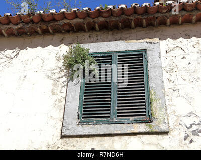 An overgrown window in the old city of Funchall, the capital of Madeira - Stock Photo