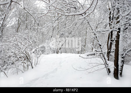Beautiful landscape with snow-covered path in the forest among the trees on a cloudy winter day - Stock Photo