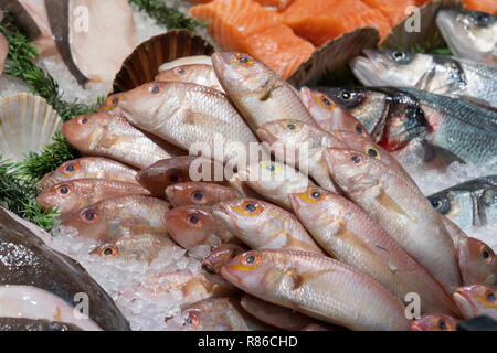 Red Snapper Fish on display at a Fishmongers in Leeds,West Yorkshire,England,UK. - Stock Photo