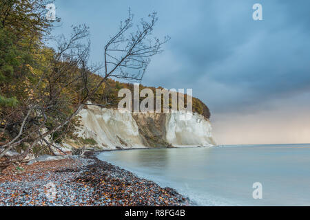 Chalk cliffs on the island of Rügen. Before sunrise in autumn mood with clouds and old tree at nature beach in Jasmund National Park - Stock Photo