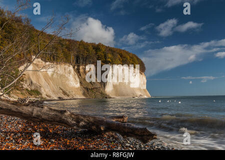 Chalk cliffs on the island of Rügen. Sunshine in autumn mood with clouds at blue sky and old tree trunk at nature beach in Jasmund National Park - Stock Photo