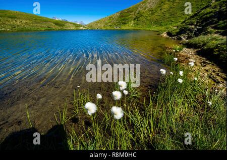 Switzerland, Valais, Tour du Mt Blanc, Trient, Tête de Balme, Catogne lake - Stock Photo