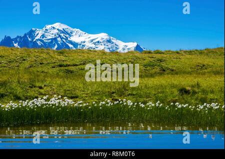 Switzerland, Valais, Tour du Mt Blanc, Trient, Tête de Balme, Catogne peats, with Mt Blanc in the back - Stock Photo