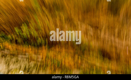 beautiful image of an explosion of yellow, green and brown colors in lines, autumn concept, copy space or text background - Stock Photo
